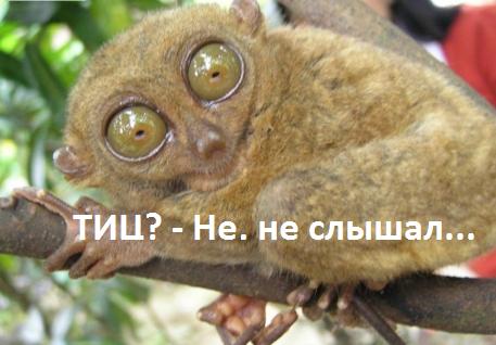 ne-slyishal-tits